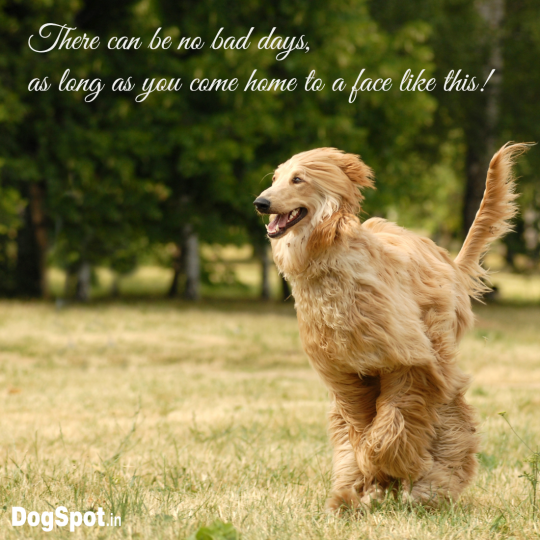 20-dog-quotes16