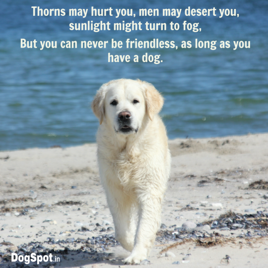 20-dog-quotes17