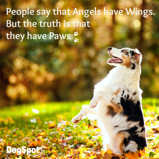 20-dog-quotes2