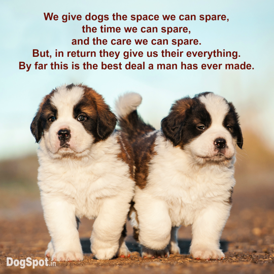 20-dog-quotes3