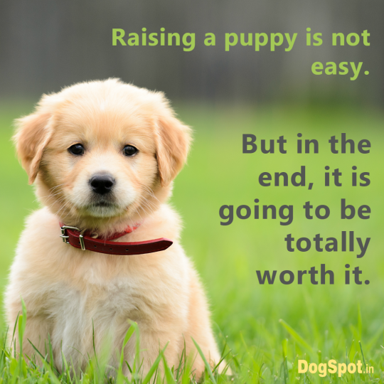 20-dog-quotes5