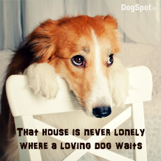 20-dog-quotes7
