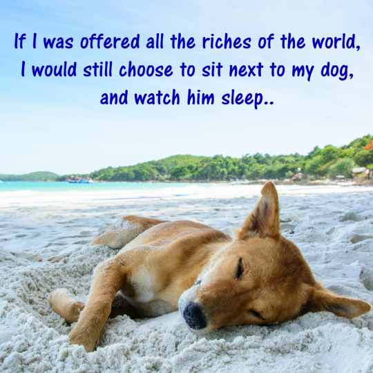 20-dog-quotes8