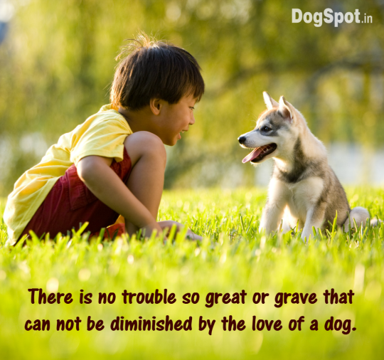20-dog-quotes9