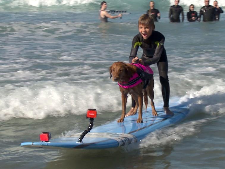2095411_surfs-up1_zmenxska5dj2jibmji5yj45z64eatuw6lrlcsphco3flmkbrawuq_757x567