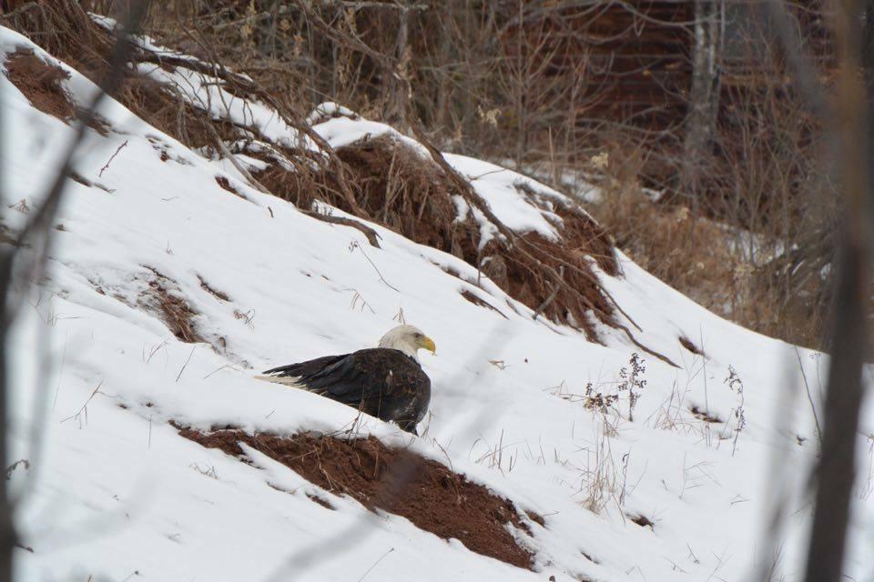dog-saves-eagle-2