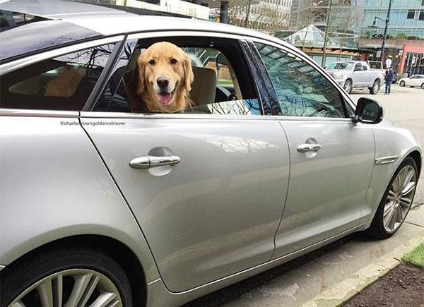 dogspot-4