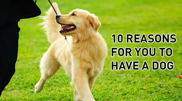 10-reasion-you-to-have-dog