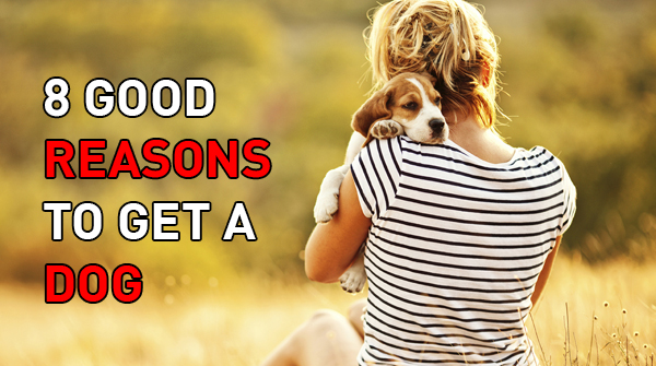 8-reason-to-get-a-dog