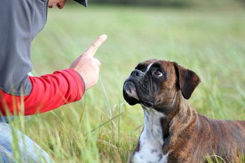 Top-Ten-Dog-Commands-3