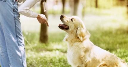 dog-commands-430x226