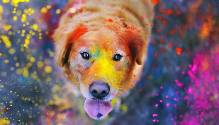 dog-playing-holi