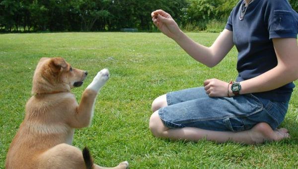 dog-training-commands