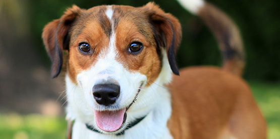 dog_adoptions