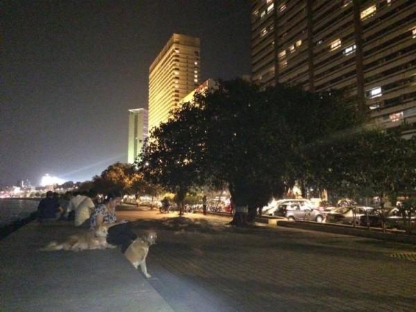 vigilante-dogs-3-750x563