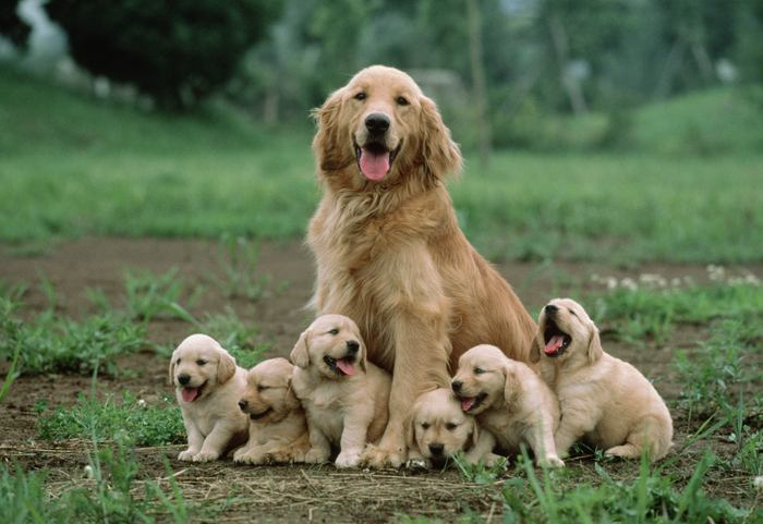 16-Mother-dog-sitting-with-her-puppies
