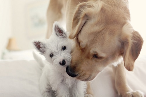 Cute-two-dogs