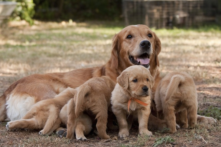 Puppies with mother