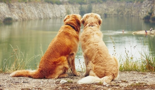 Two-Dogs-Better-Than-One