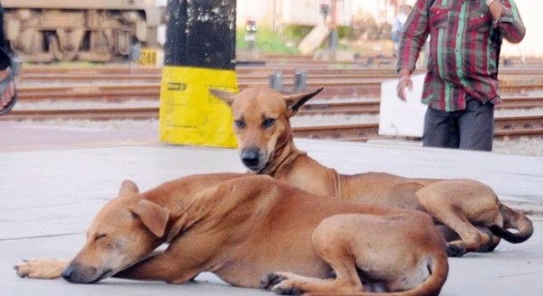bjp-leaders-killed-4-stray-dogs-in-chattisgarh-by-shooting-them-652x400-1459754254