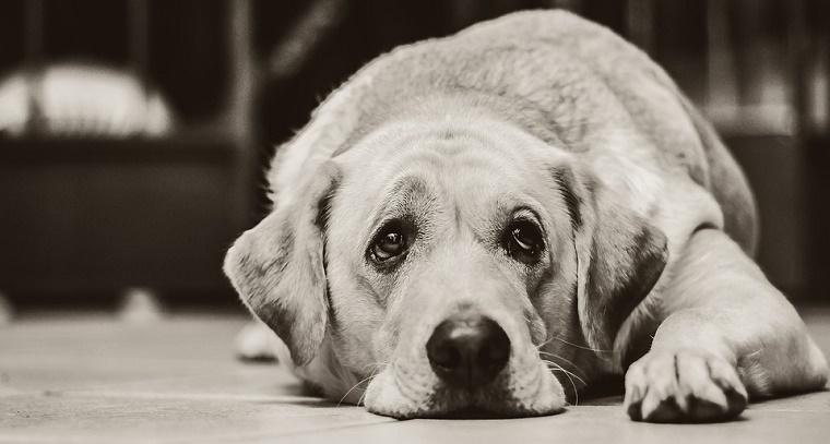 dog-1126025_960_72