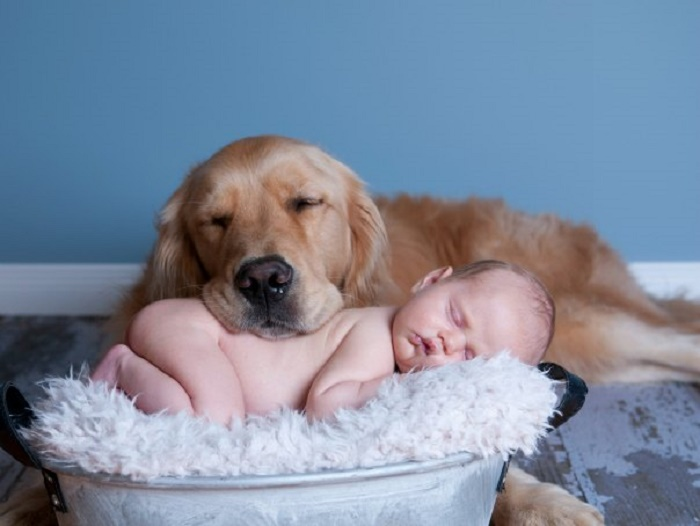 dog-and-newborn-cuddling-604x454