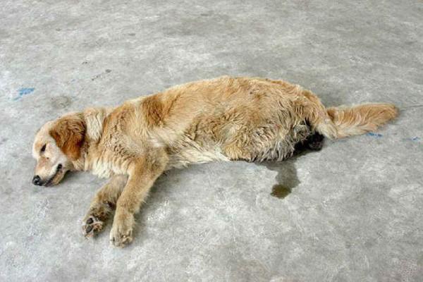 dog-cruelty-44