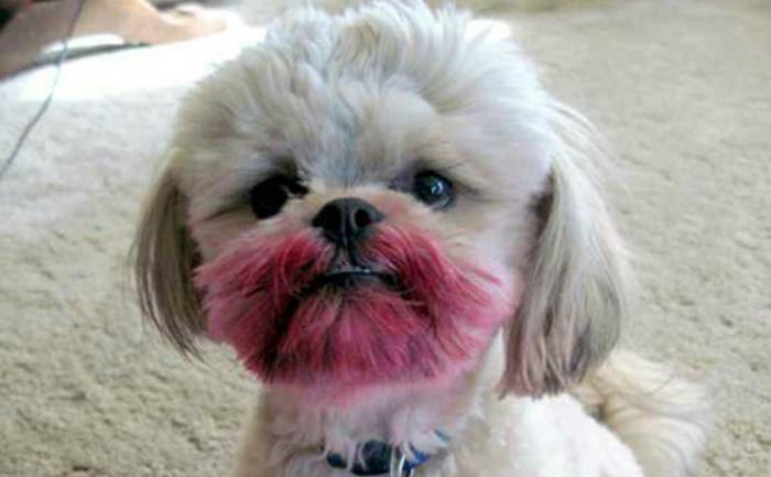 dog-makeup-feat