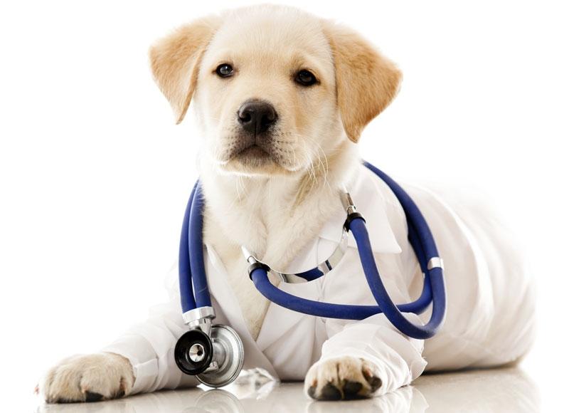 dog-vet-ef1a4bcb