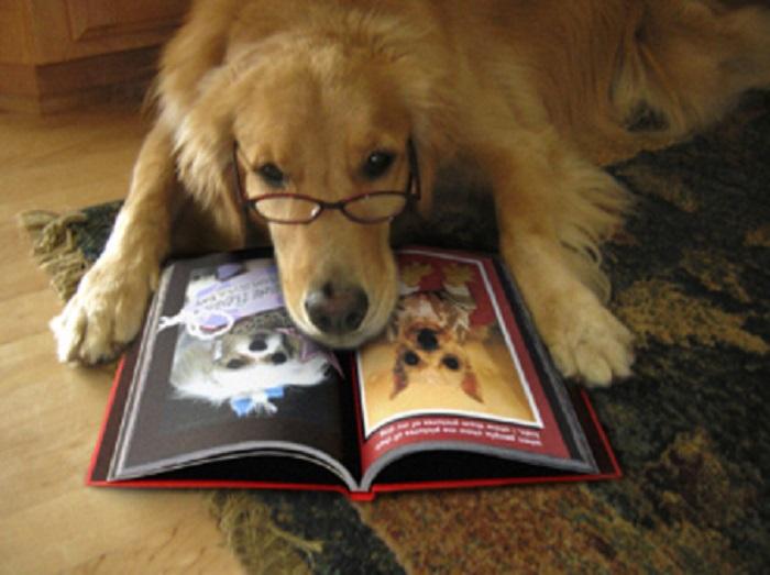 Dog in Book