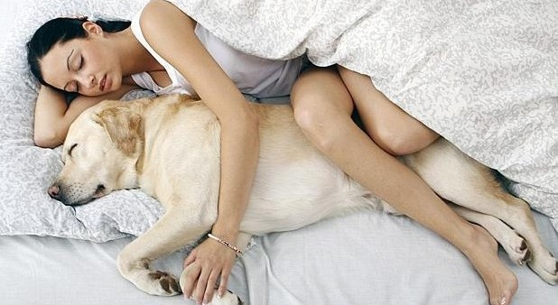 sleeping-with-pets-large