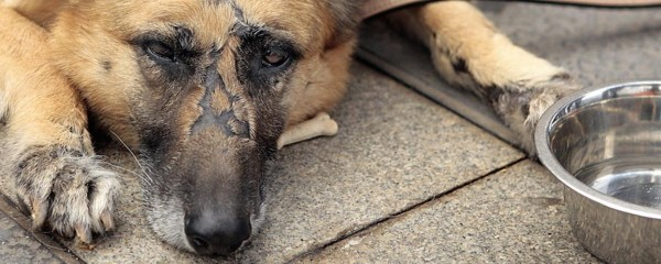the-fbi-is-now-keeping-track-of-animal-abuse-the-same-way-as-other-top-tier-felonies-1452192117