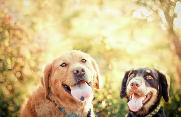 two-dogs-jessica-trinh
