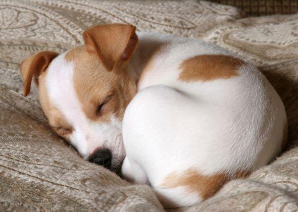 dog-curled-up-asleep