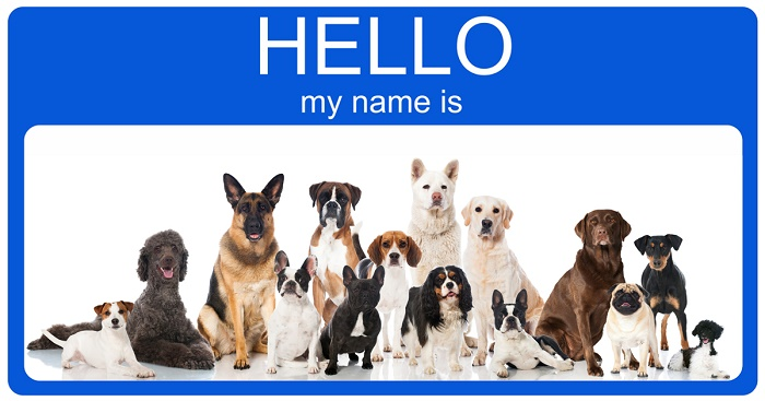 file_2153_what-is-the-best-name-for-a-dog