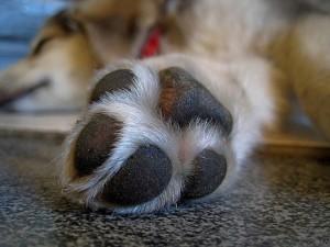 paw puppy paw