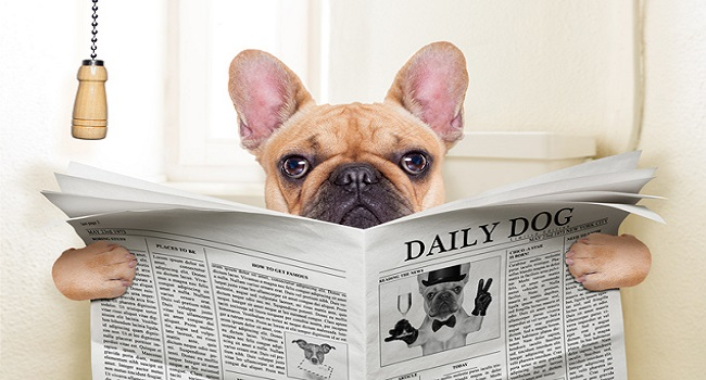 0-Dog-Newspaper-635