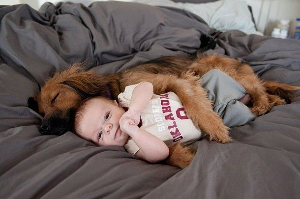 140013-Dog-And-Baby