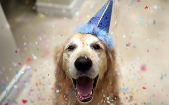 2-dog-in-party-hat-1