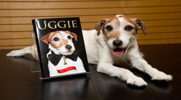 "SANTA MONICA, CA - OCTOBER 19:  Uggie the dog poses with a copy of his book ""Uggie : My Story"" at Barnes & Noble 3rd Street Promenade on October 19, 2012 in Santa Monica, California.  (Photo by Amanda Edwards/WireImage)"