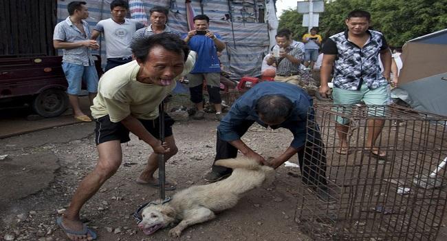 25-China-Dog-EPA
