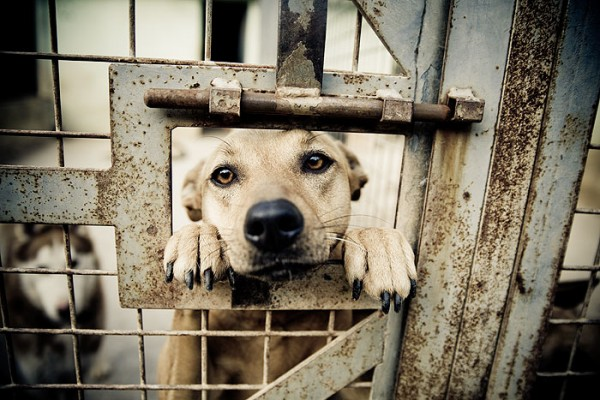 5-reasons-to-love-a-shelter-dog-1