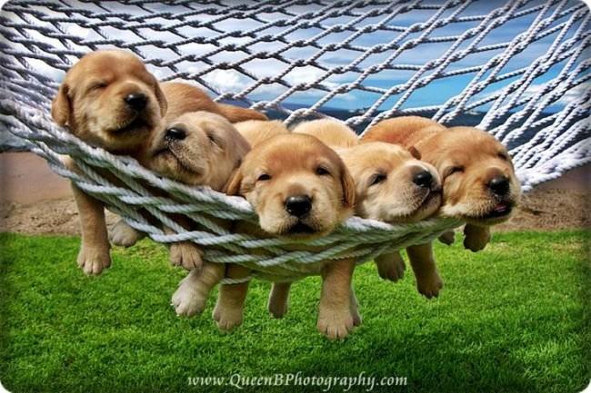 635962564442332906-1356014745_puppy