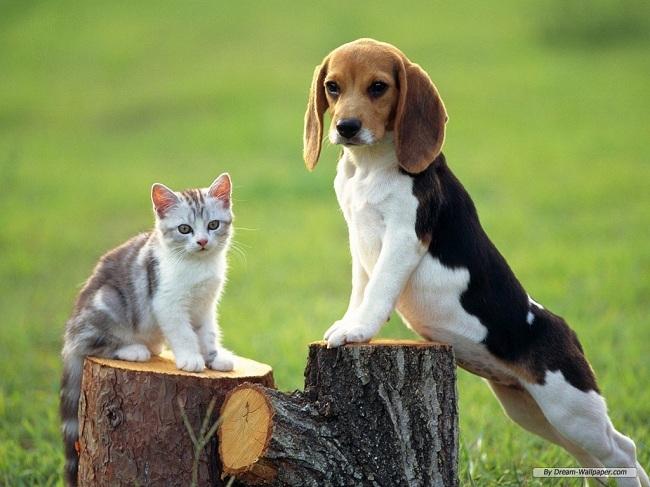 Beagle-Wallpaper-dogs-7013953-1024-768
