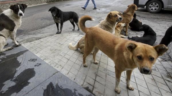 Bhutan_dogs