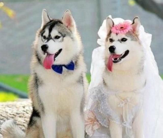 Dog-Couple-12