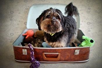 Packing-suitcase-dog