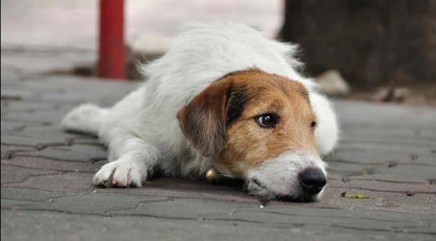 Sad-dog-e1382258367817