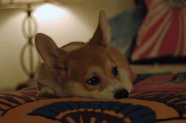 Sake-Bedtime