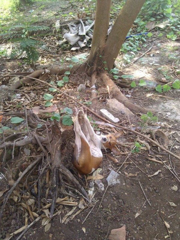 Stray-dogs-culled-9